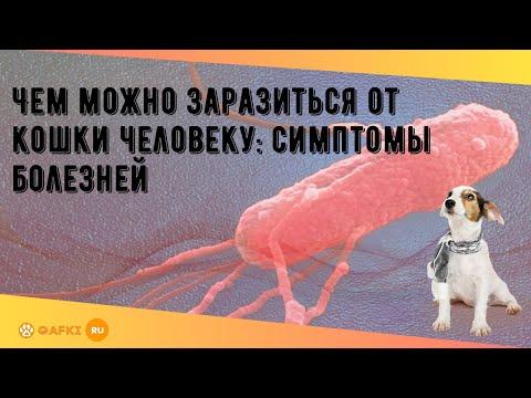 Инфекции, которые передаются от человека к животному