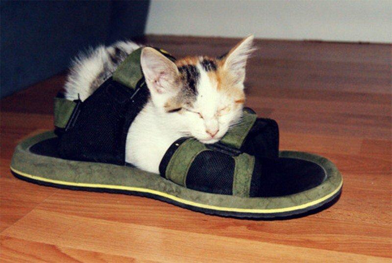 Кошка которая приносит тапочки