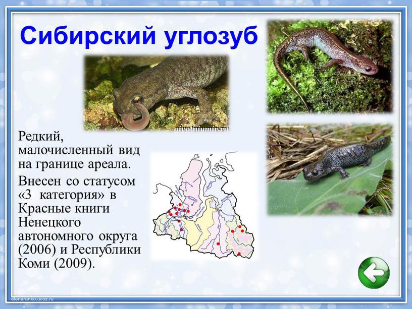 Байкальская нерпа, ареал обитания ушканьи острова