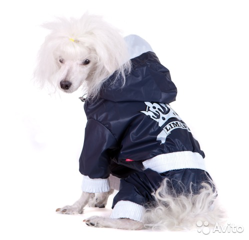 Дождевики для собак: особенности для крупных пород, лабрадора и таксы
