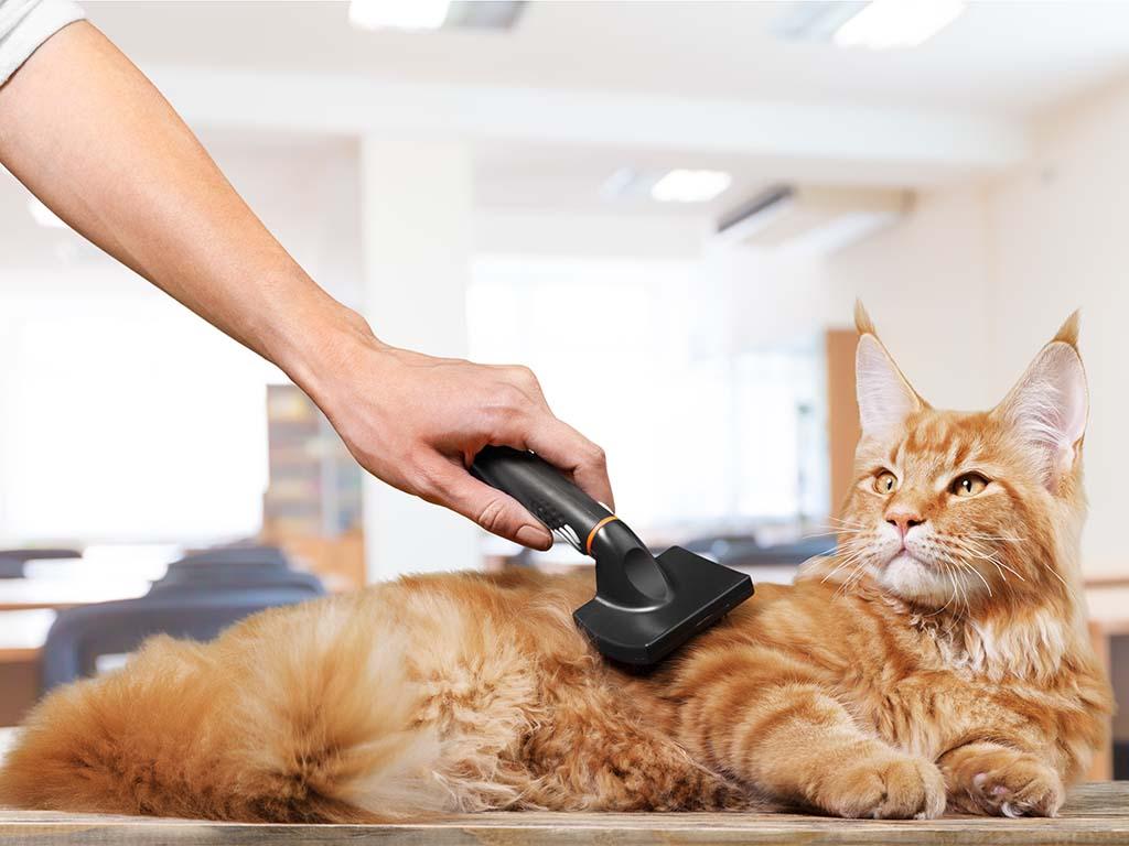 Стрижка кота: польза для здоровья питомца   ветмед