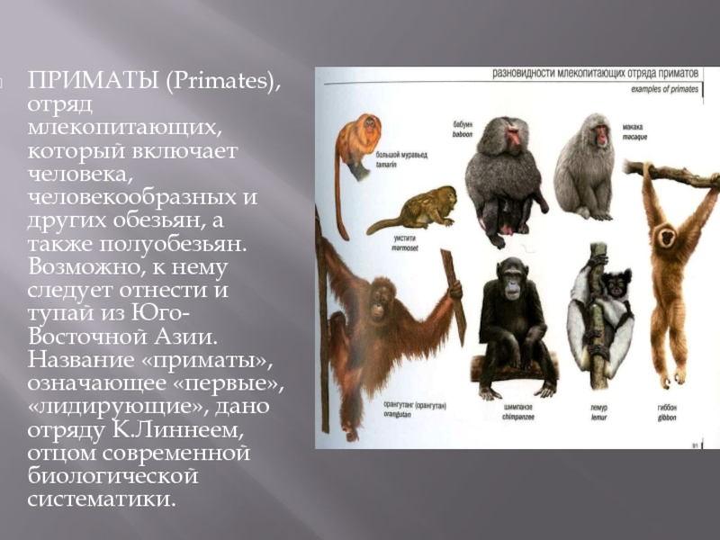 Где можно найти тех или иных обезьян? известные места проживания