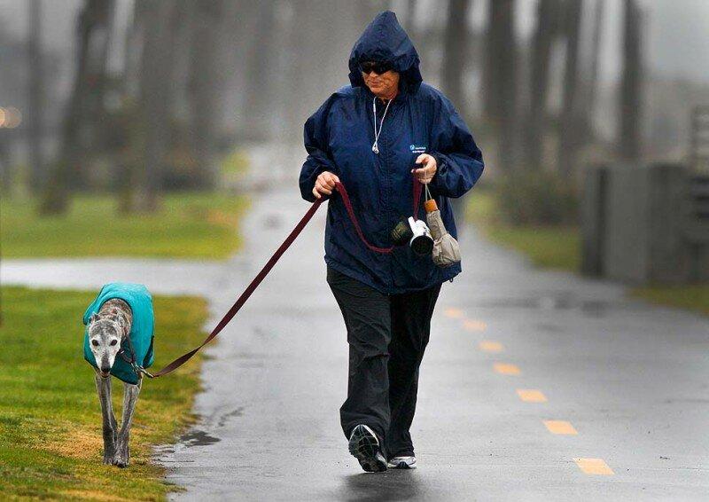 Сколько на самом деле нужно гулять с собакой