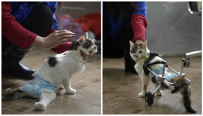 """Переломы и вывихи у кошки: причины, симптомы, лечение   блог ветклиники """"беланта"""""""