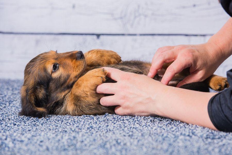Почему щенок икает: что такое икота, причины её возникновения и тревожные симптомы. что делать, если щенок икает? - автор екатерина данилова - журнал женское мнение