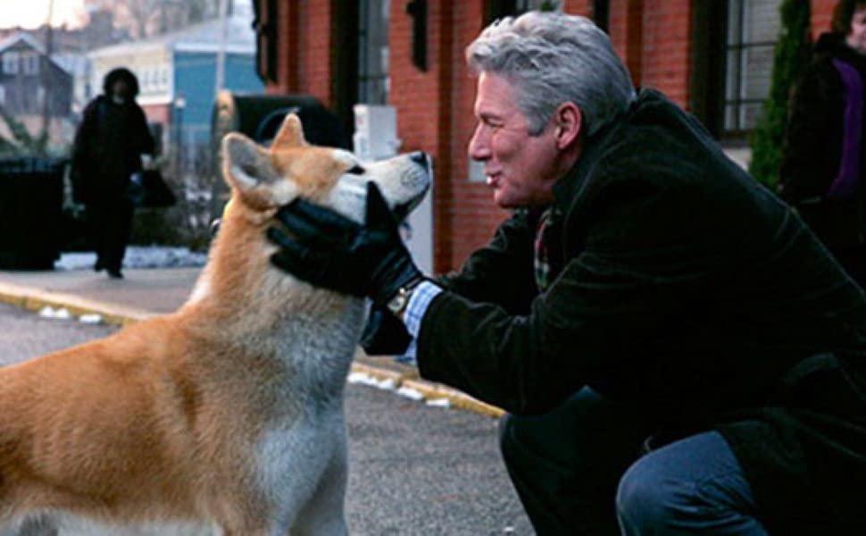 Акита-ину: все о собаке, фото, описание породы, характер, цена