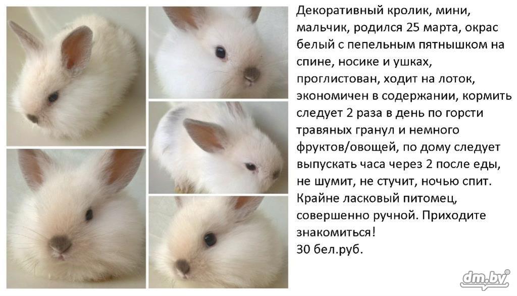Имена для кроликов девочек и мальчиков, видео и фото