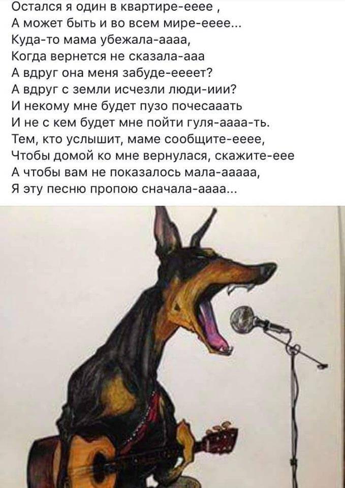 Если у соседей постоянно, громко лает и воет собака: что делать по закону, куда обращаться