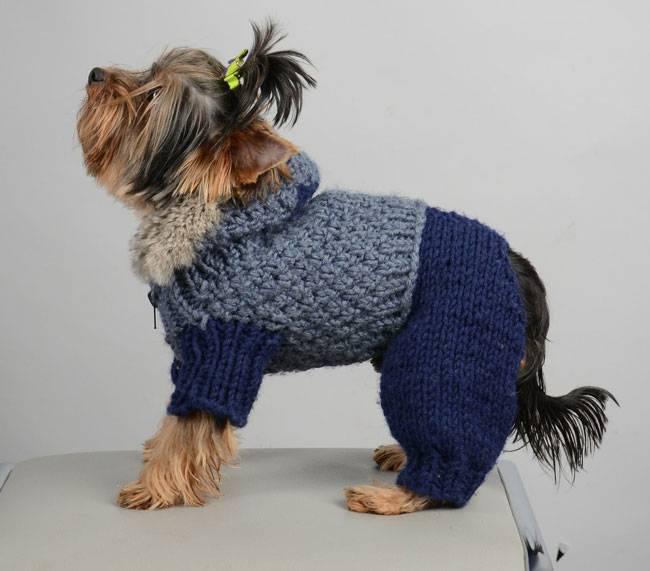 Вязание для собак мелких пород спицами йорку