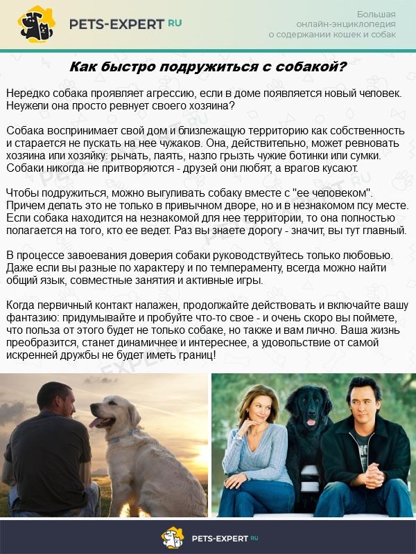 Лучшие зоогостиницы москвы: где оставить кошку или собаку на время отпуска