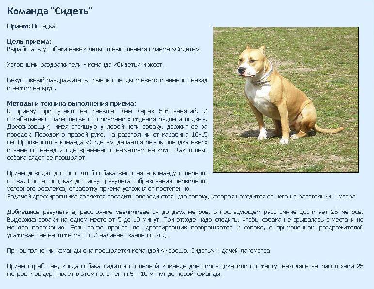 Как научить собаку или щенка команде «ко мне»