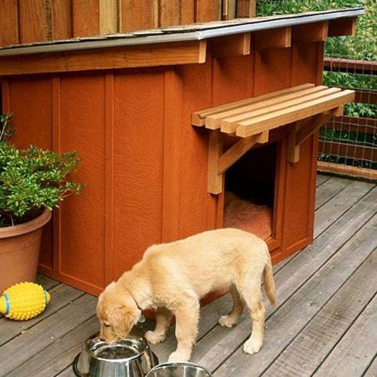 Как приучить собаку к туалету на улице?