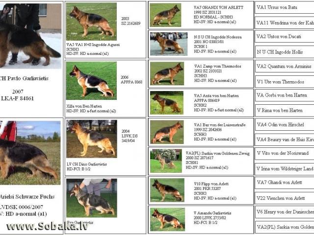 Красивые клички для собак девочек овчарок немецких легкие со значением