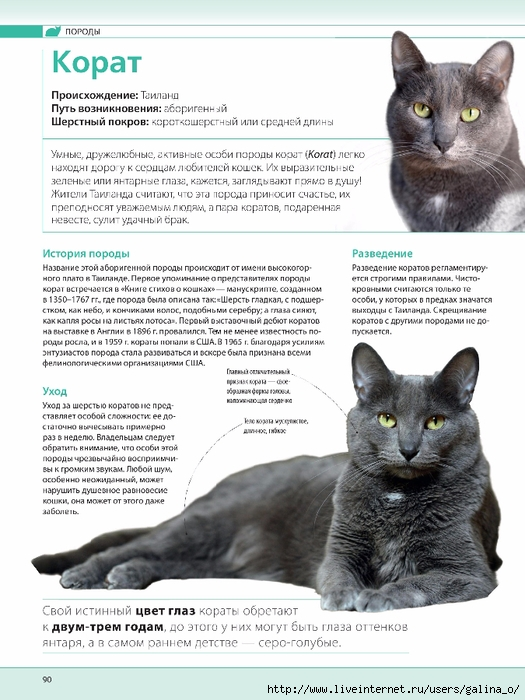 ᐉ мэнкс или мэнская кошка - описание пород котов - ➡ motildazoo.ru