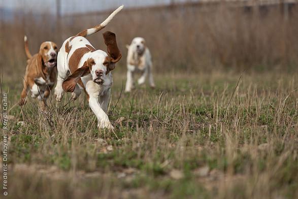 Виды охоты с гончими: разные тактики и различная дичь