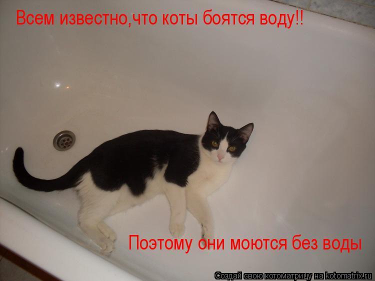 Почему кошки боятся воды? подробное описание, как правильно искупать и приучить кота к воде