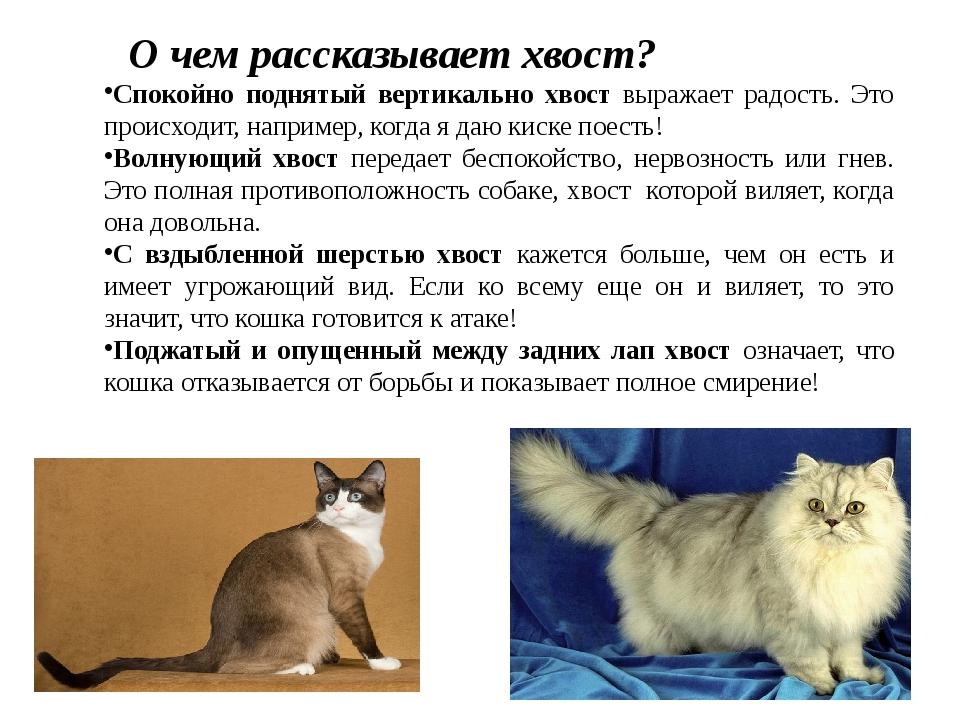 Что значит, когда кошка не может поднять хвост?