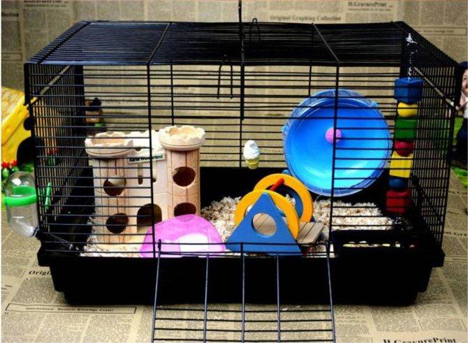 Как ухаживать за хомяком? как правильно содержать хомяка дома? инструкция по уходу за маленькими хомячками в домашних условиях