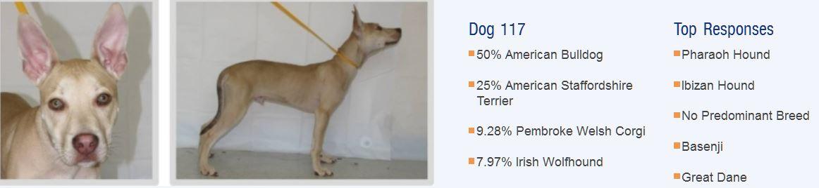 Определяем породу собаки, по внешности и характеру, признаку