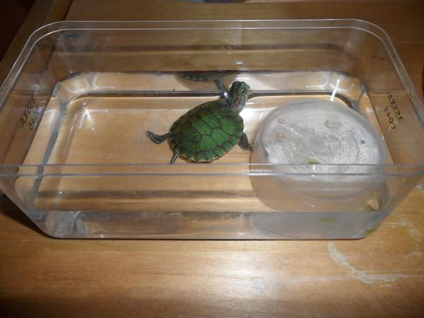 Инструкция для подготовки воды в аквариум