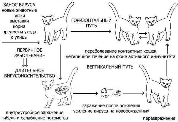 Почему кошка нервничает? | hill's pet