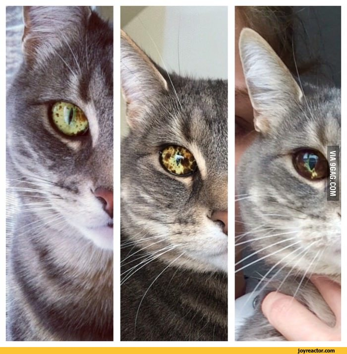 Как определить возраст котенка: основные методы и варианты подсчета