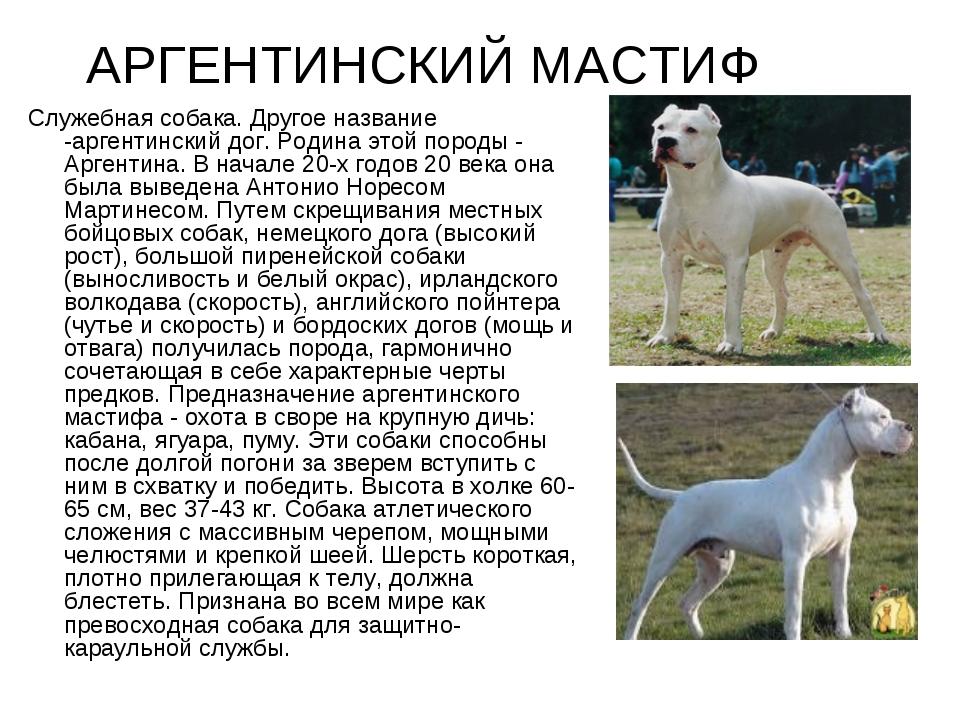 Тибетский терьер собака. описание, особенности, виды, цена и уход за породой | живность.ру