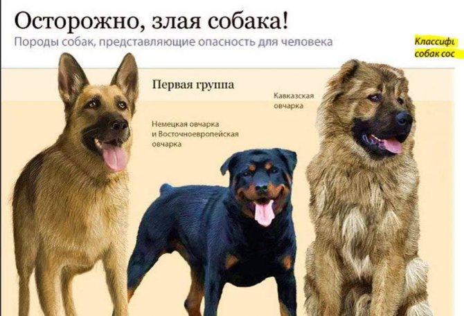 Самая умная маленькая порода собак – мнение профессиональных заводчиков - kupipet.ru