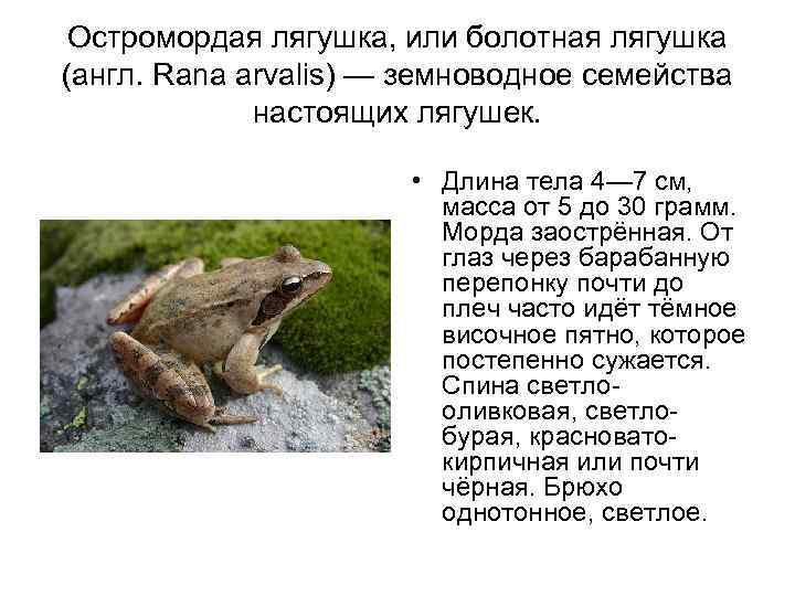 Виды лягушек. описание, особенности и названия видов лягушек