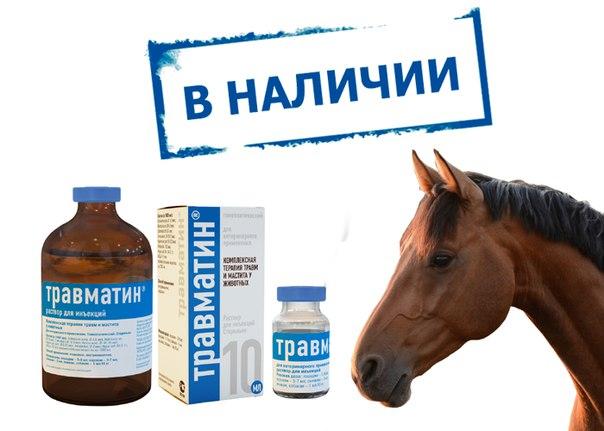 Травматин для кошек: инструкция по применению, состав, дозировка и цена | kotodom.ru