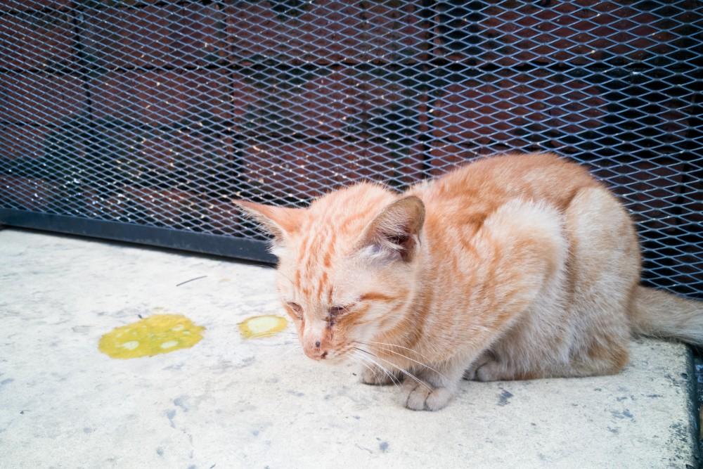 Болезни кошек: признаки и причины | вет005