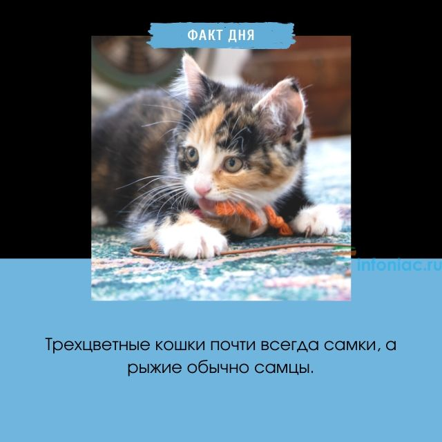 Приметы о кошках