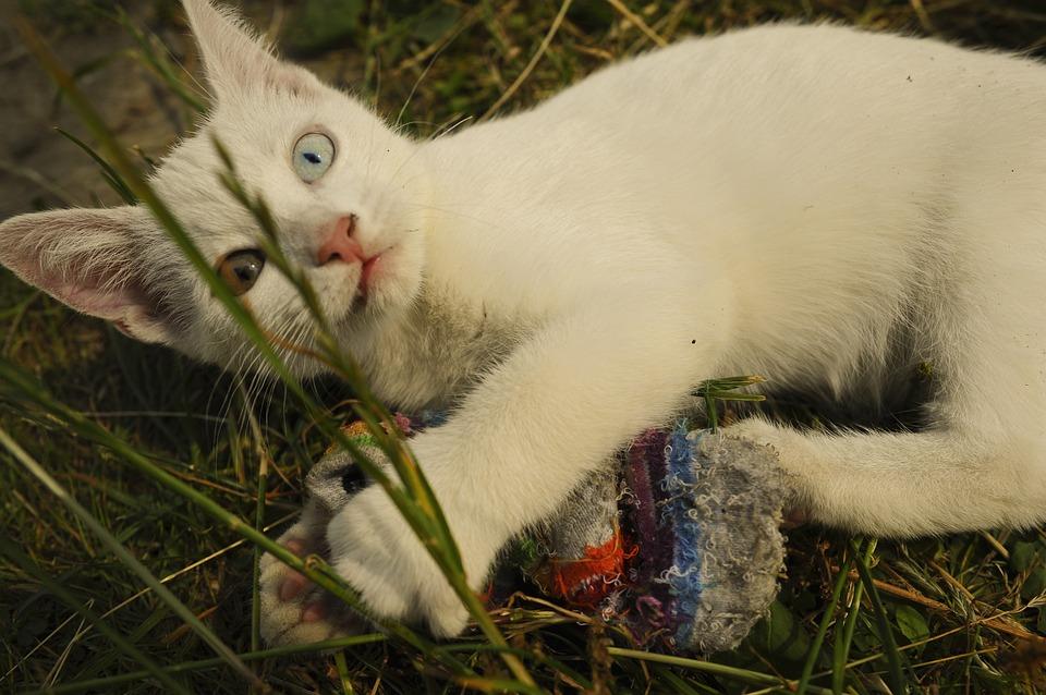 Глухая кошка какая порода