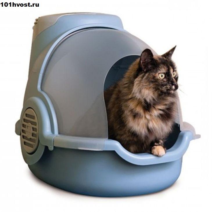 """""""главное - не ругать!"""": опытный заводчик рассказал, как приучить котенка к лотку и какой наполнитель лучше всего"""