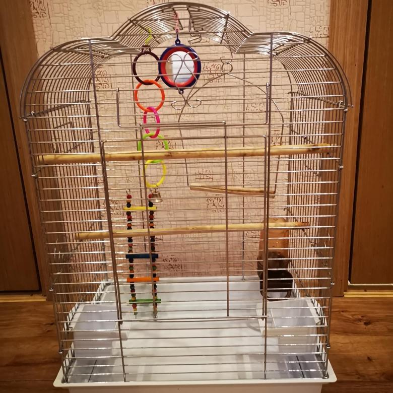 ᐉ клетка для попугая своими руками: как сделать, пошаговая инструкция - kcc-zoo.ru