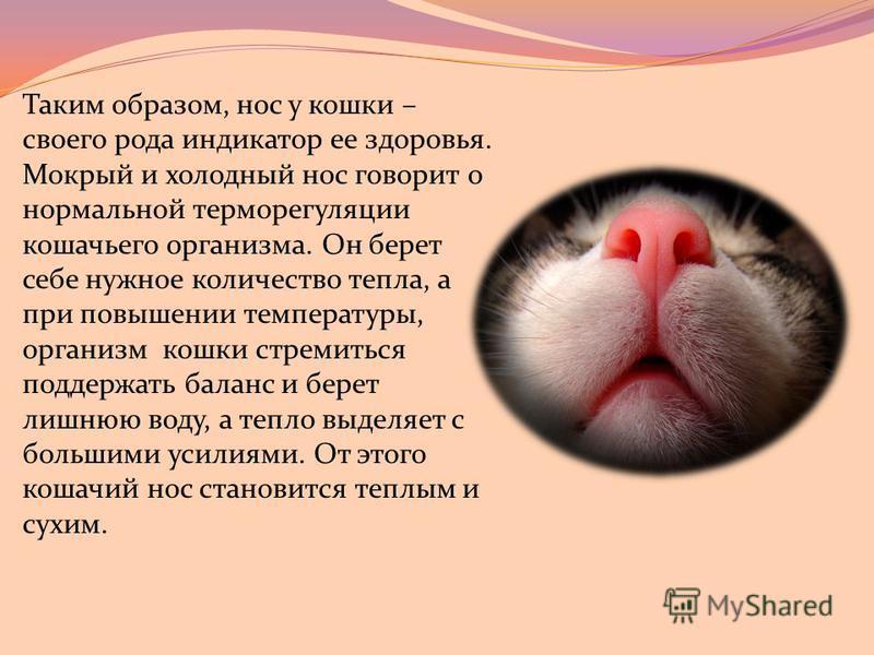 Что делать если у собаки сухой нос, причины сухого и горячего носа