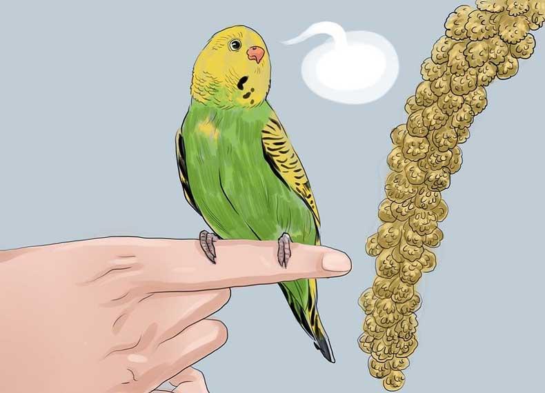 Как научить попугая говорить: 11 шагов