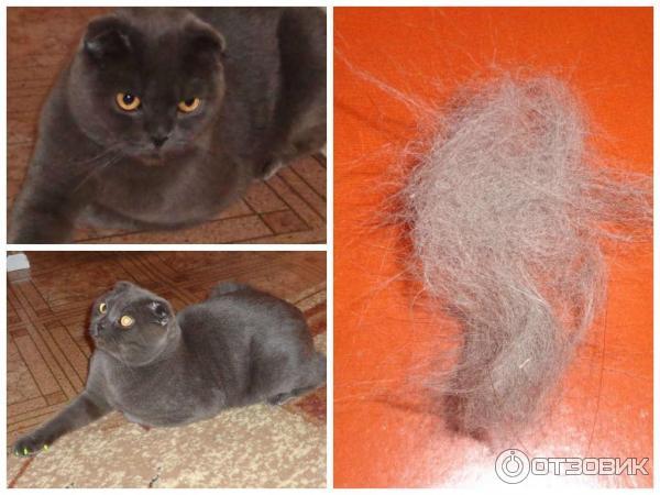 Линька у котов: причины и как избавиться
