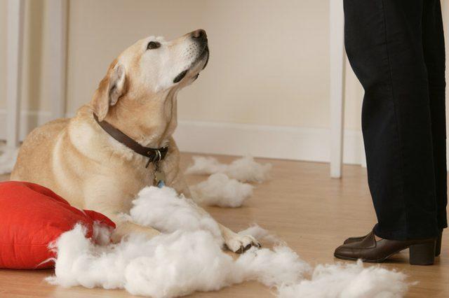Как правильно наказывать и ругать собаку – а чего делать не стоит