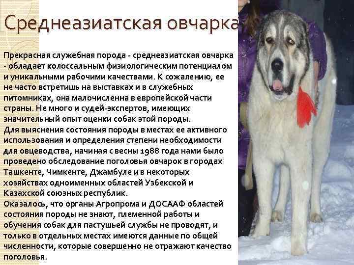 Алабай собака характеристика породы характер