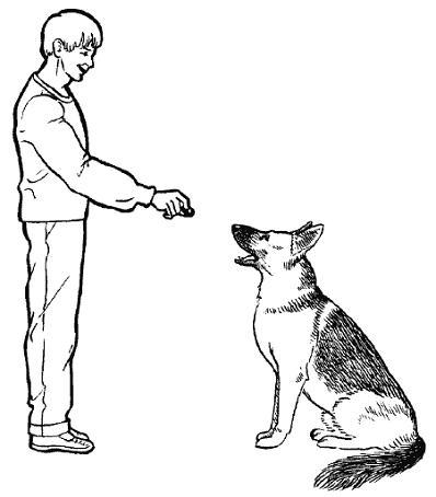 Как научить собаку командам: базовые и дополнительные команды, методы дрессировки