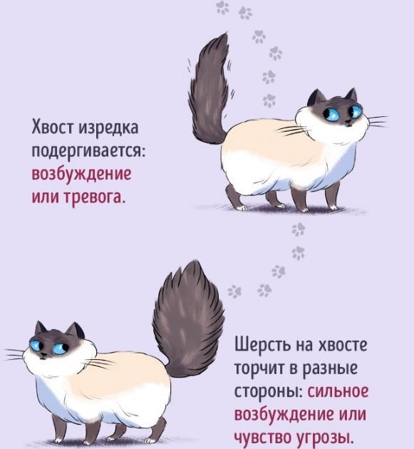 Что значит, когда кот машет хвостом?