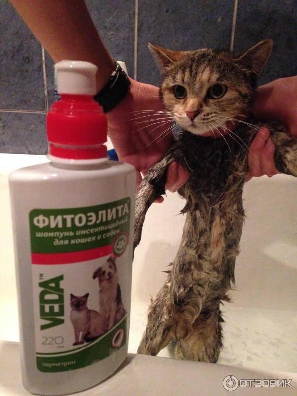 Как действует ошейник от блох для кошек и котят, с какого возраста одевать?