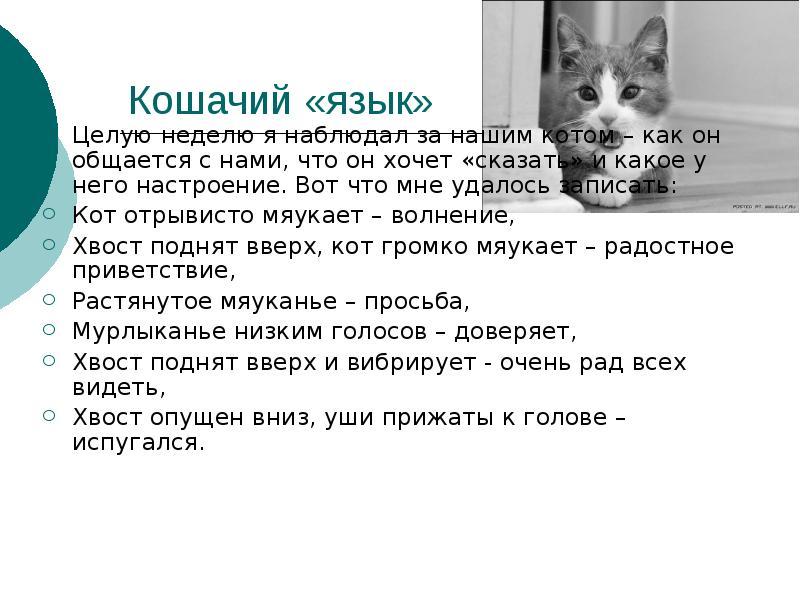 Умеют ли кошки разговаривать