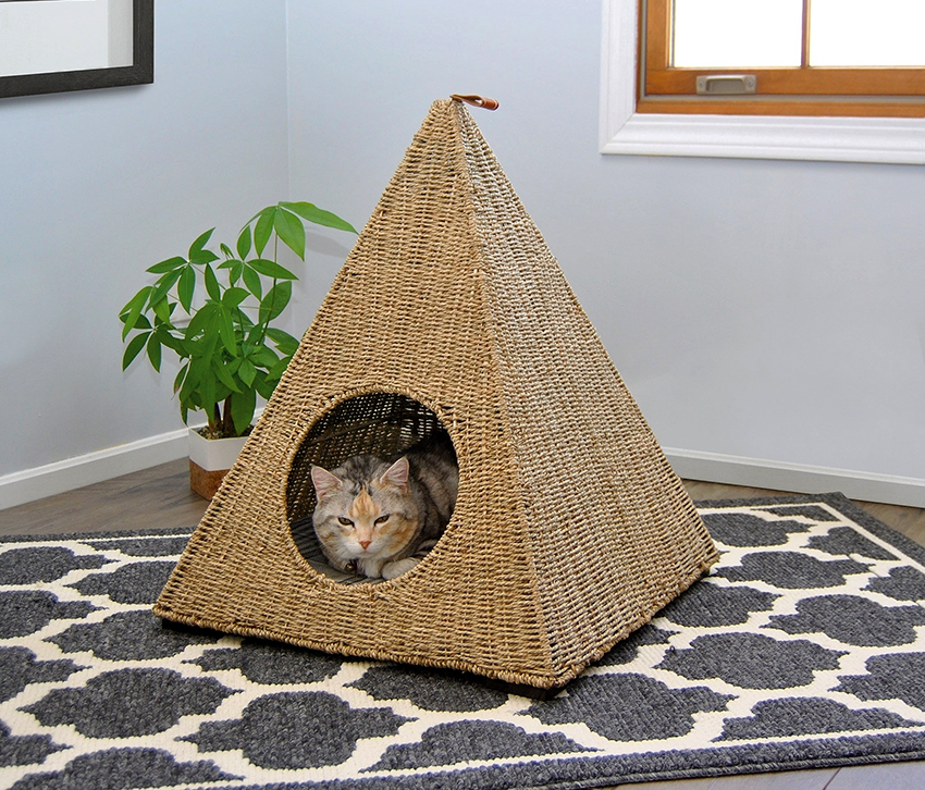 Как избавиться от соседских котов у себя на участке?