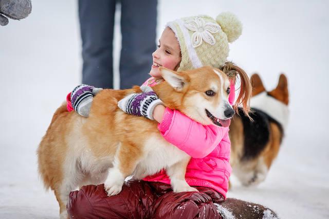 Породы собак для детей с названиями и фото: какие добрые (маленькие, средние и крупные) подходят для квартиры, семьи и охраны, советы, как выбрать самую лучшую?