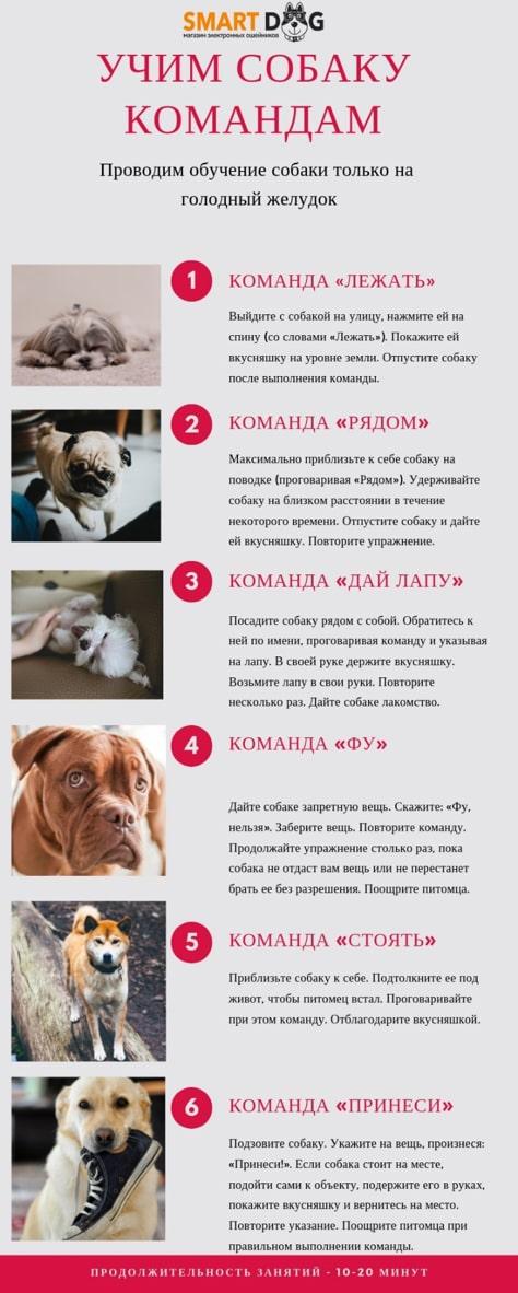 Как научить собаку команде «лежать»? как обучить щенка и взрослую собаку? как дрессировать большие и маленькие породы?