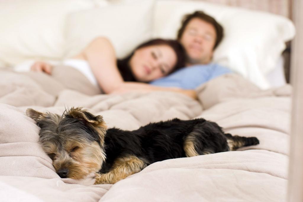 Разрешать ли собаке спать на кровати - решать хозяевам
