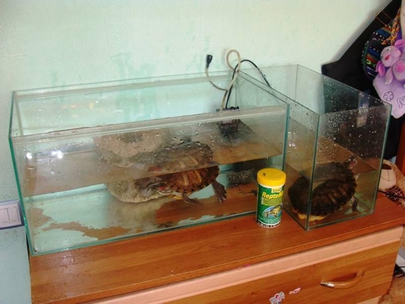 Как сделать островок и мостик для красноухой черепахи своими руками (бережок, плотик, суша в домашних условиях из подручных материалов)