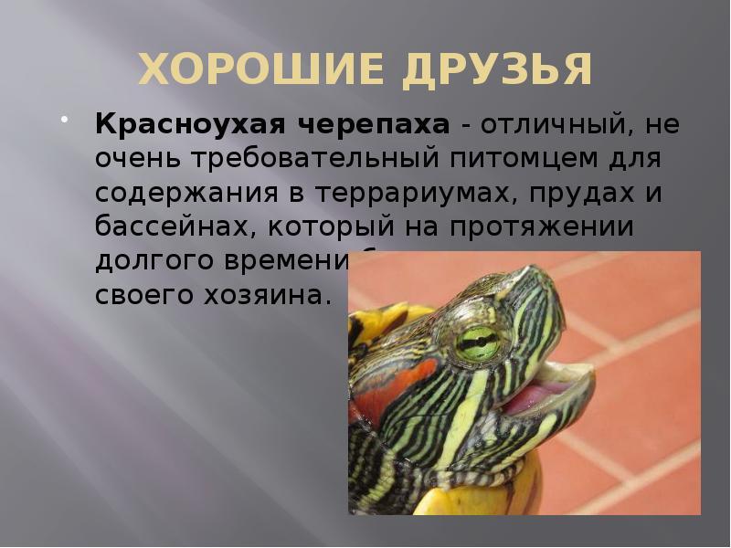 ᐉ как разбудить и вывести черепаху из спячки в домашних условиях - zoopalitra-spb.ru